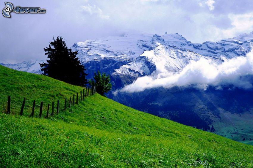 montaña nevada, prado, valla