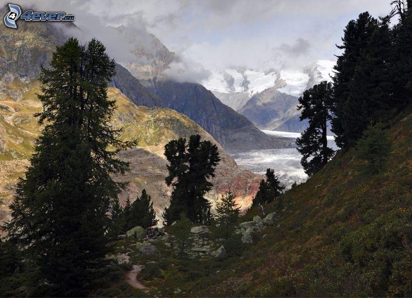 montaña rocosa, árboles coníferos, montañas nevadas