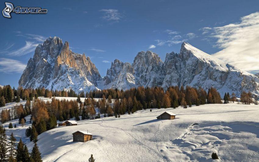 montaña rocosa, montañas nevadas, árboles coníferos