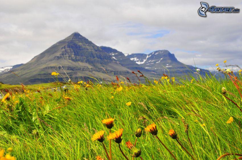 montaña rocosa, prado, carlina