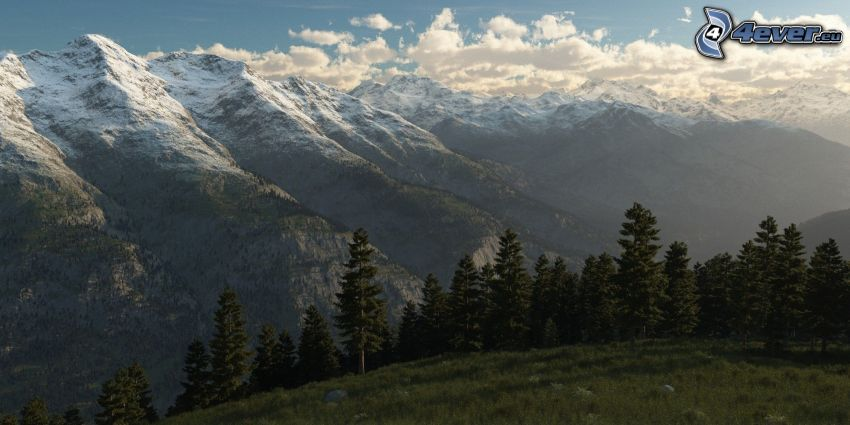 montañas nevadas, árboles coníferos