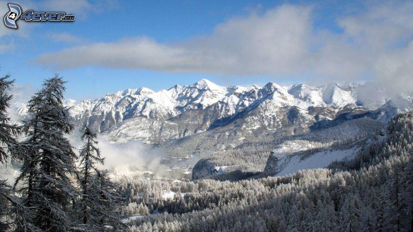 montañas nevadas, bosque, colina