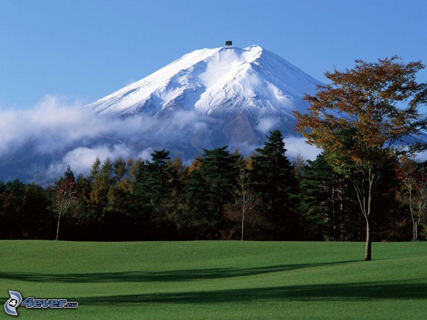 monte Fuji, montaña nevada, bosque, árboles, césped