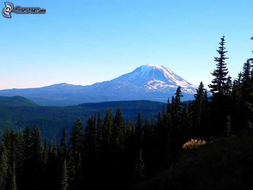 Mount Adams, bosques de coníferas