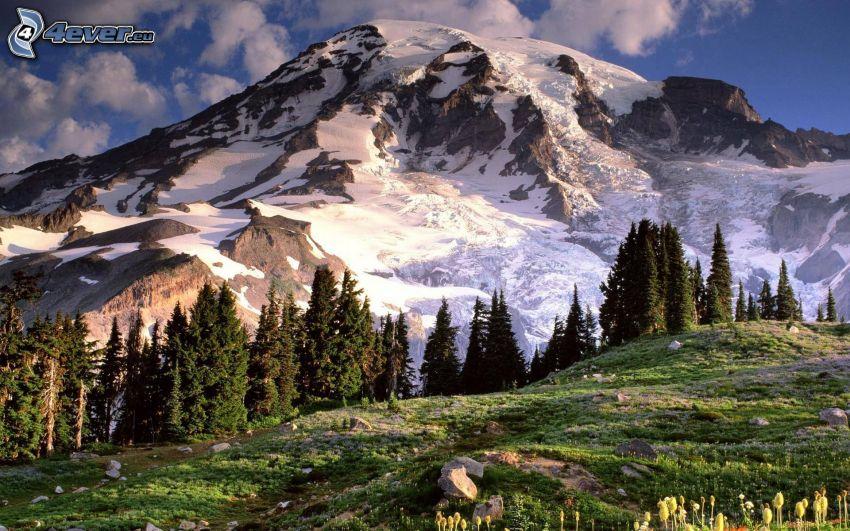 Mount Adams, montaña nevada, bosques de coníferas