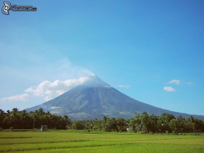 Mount Mayon, bosque, prado, Filipinas