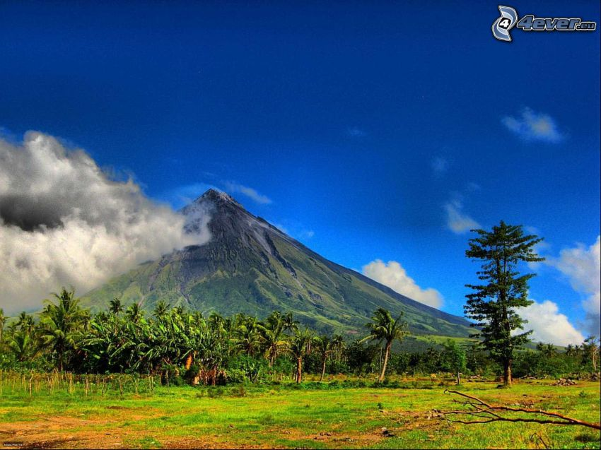 Mount Mayon, Filipinas, volcán, prado, palmera
