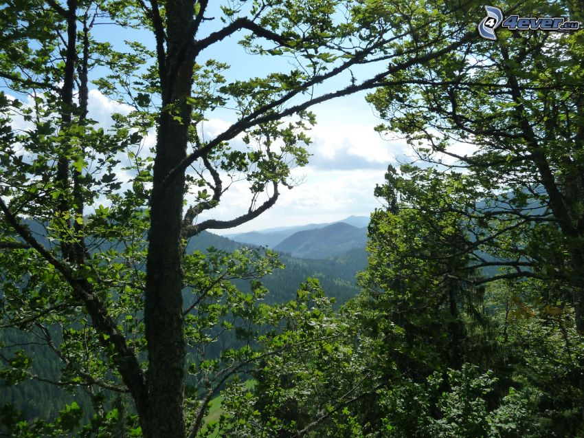 Muránska planina, Slovenské rudohorie, árboles de hoja caduca, bosque