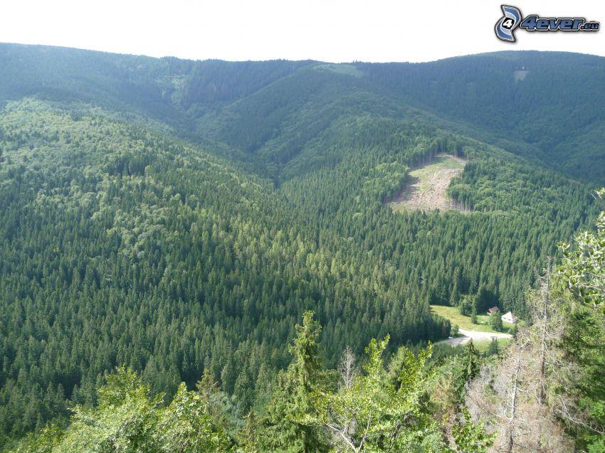 Muránska planina, Slovenské rudohorie, choza, bosque, árboles verdes