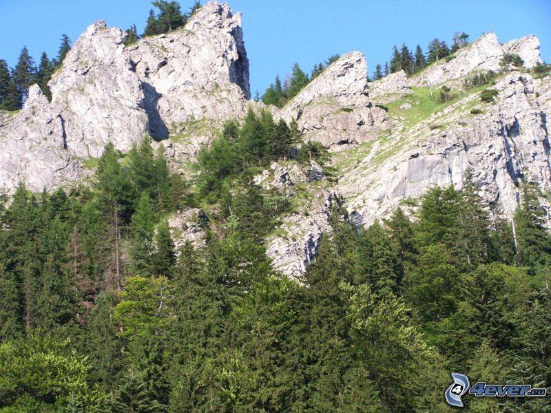 naturaleza, montañas, bosque