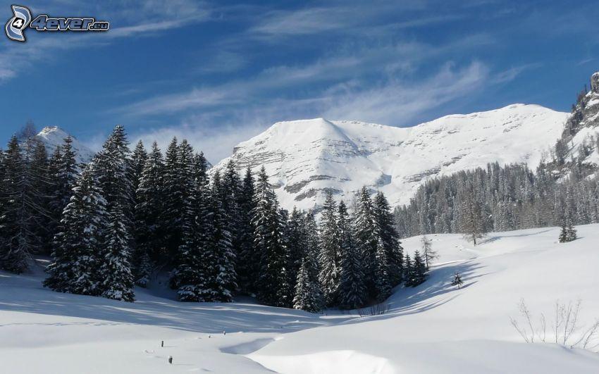 paisaje nevado, bosque nevado, montañas nevadas