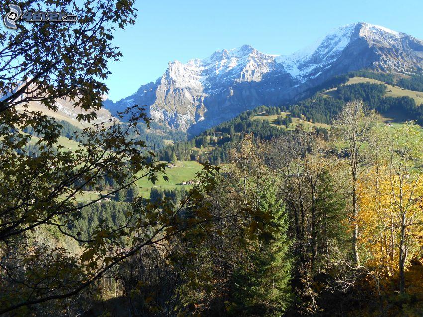 Suiza, montañas nevadas, árboles