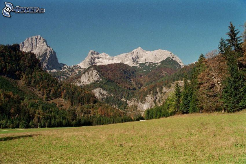 Totes Gebirge, prado, bosques de coníferas, montaña rocosa