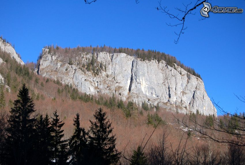 Totes Gebirge, rocas, arrecife, árboles secos