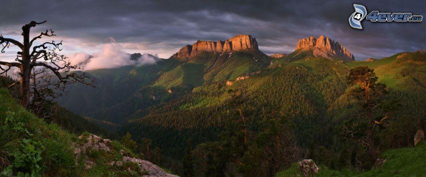 vista del paisaje, árbol seco, montaña rocosa, bosques de coníferas, nubes