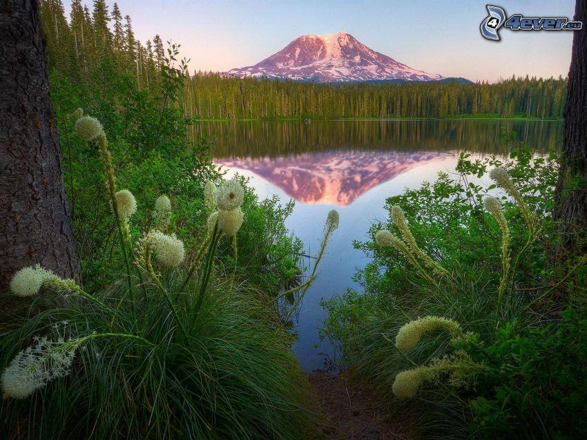 Mount Adams, lago, reflejo, bosques de coníferas