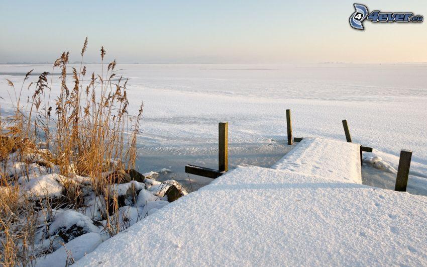 muelle, nieve, hierba seca