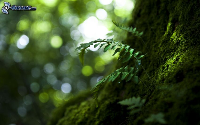 musgo, helechos, corteza de árbol