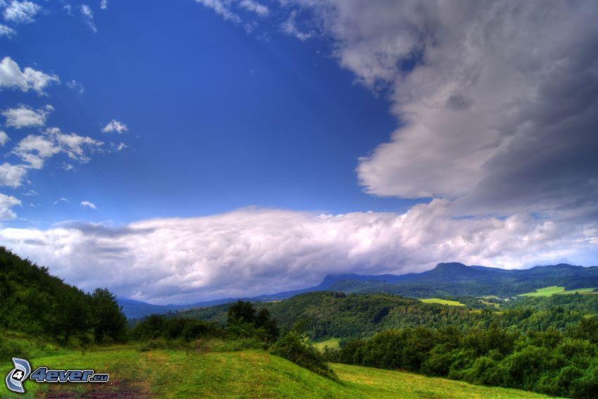 naturaleza, bosque, cielo, nubes, hierba