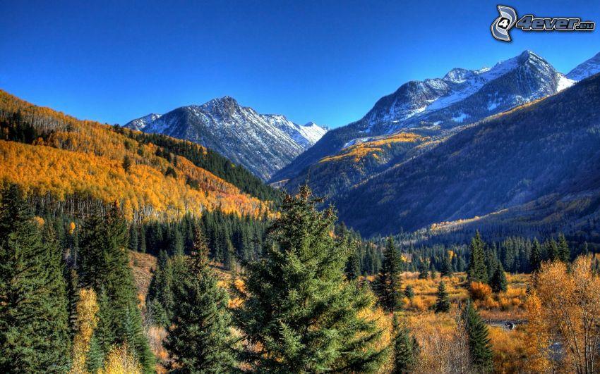 naturaleza, bosque, montañas nevadas
