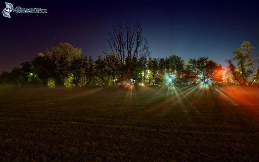 noche, árboles, luces