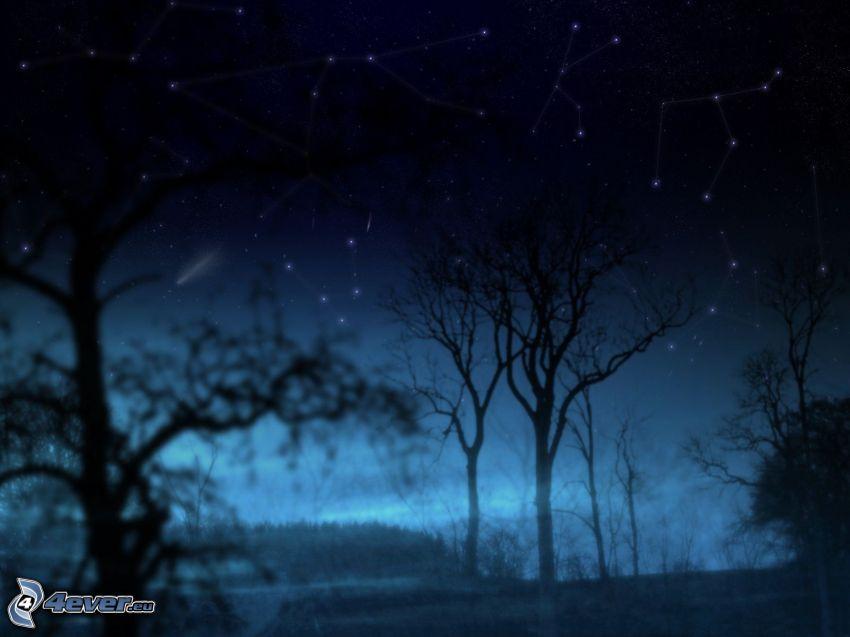 noche, siluetas de los árboles, constelación