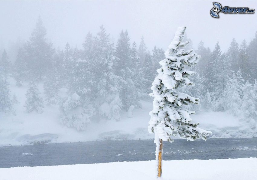 paisaje nevado, árbol nevado, corriente