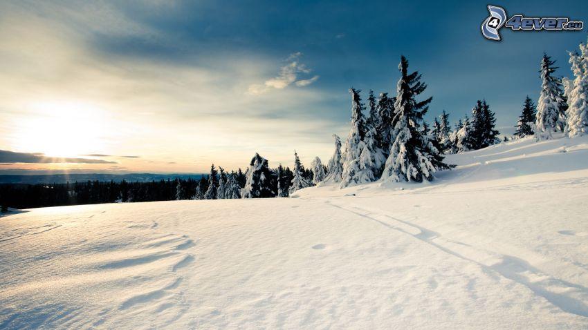 paisaje nevado, árboles, puesta de sol de invierno