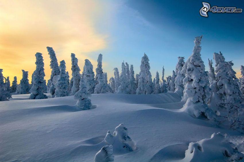 paisaje nevado, árboles nevados, salida del sol