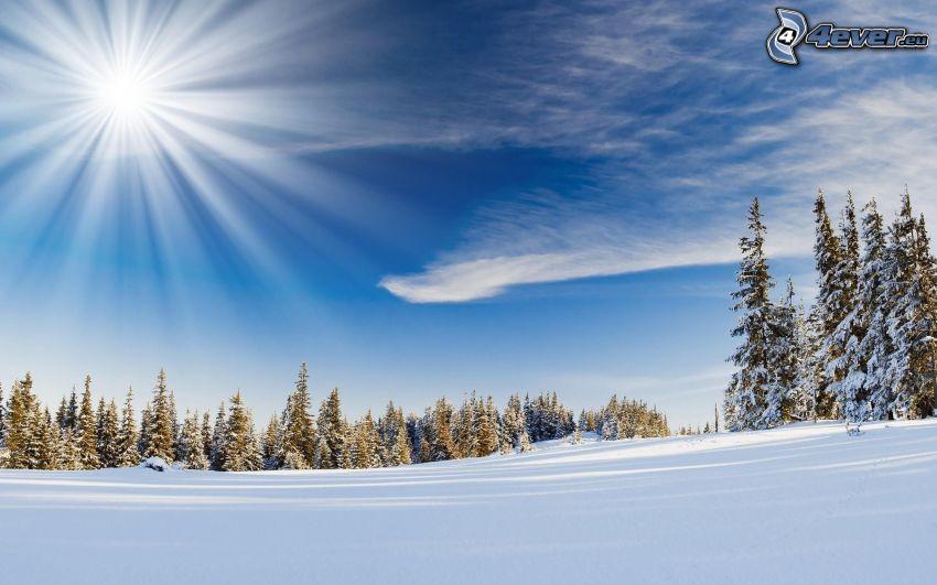 paisaje nevado, sol