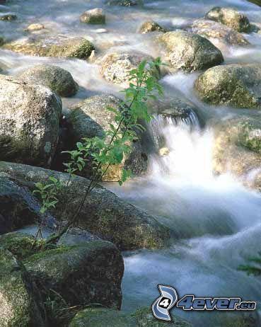 agua, río, cascada, rocas, planta