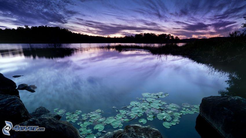 alba de noche, lago, cielo, lirios de agua
