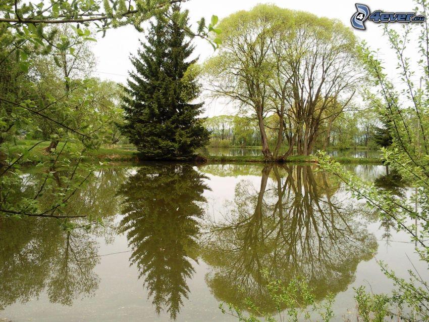 árbol cerca de un lago, árboles, nivel de aguas tranquilas, reflejo