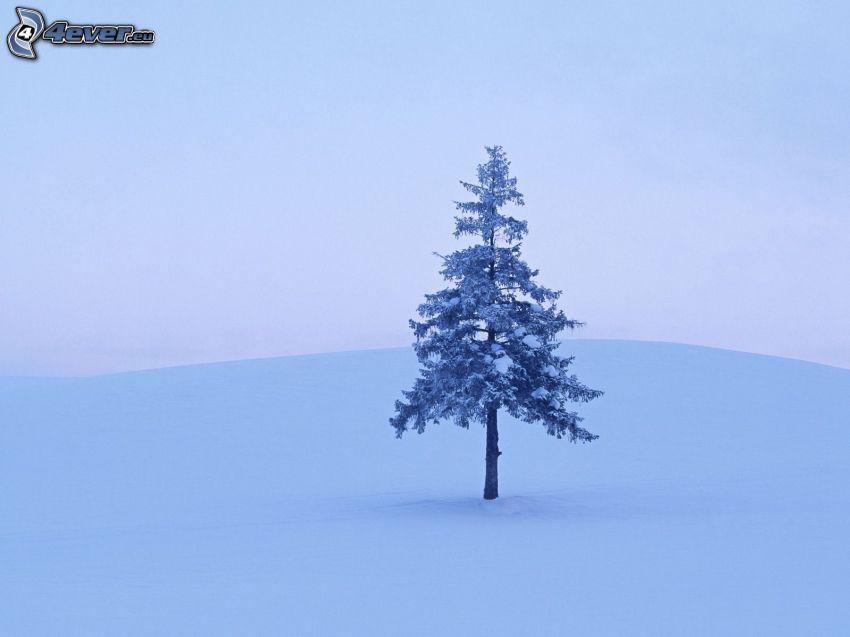 árbol conífero nevado, nieve