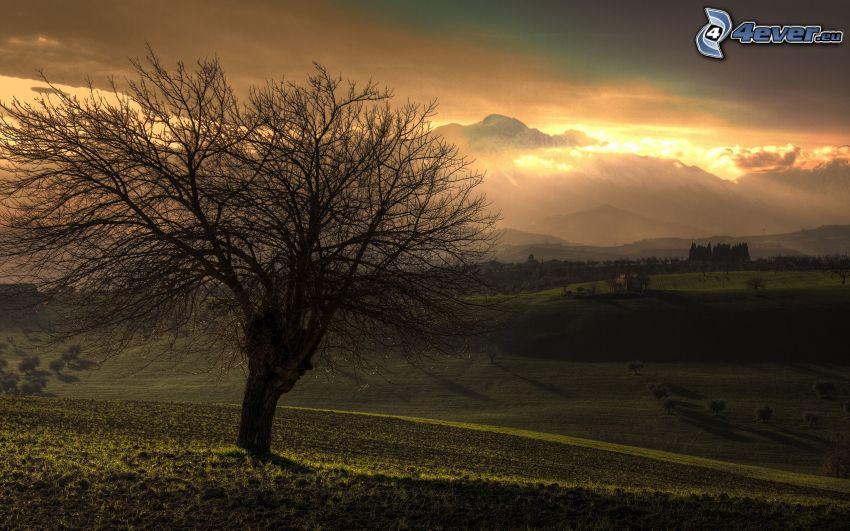 árbol en el campo, árbol solitario, puesta del sol, prados