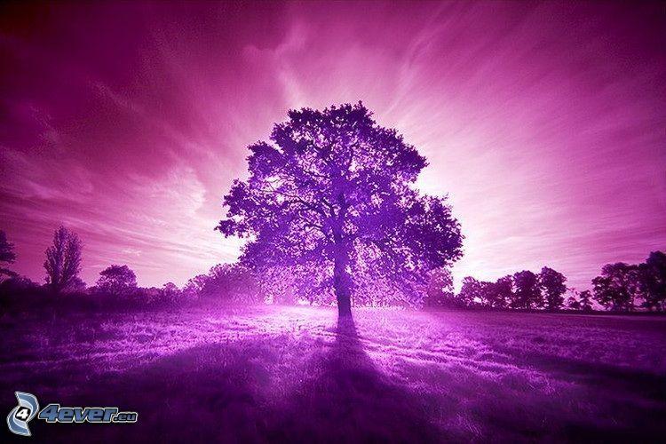 árbol en el campo, luz intensa, hierba