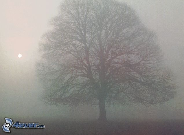 árbol en niebla, árbol ramificado