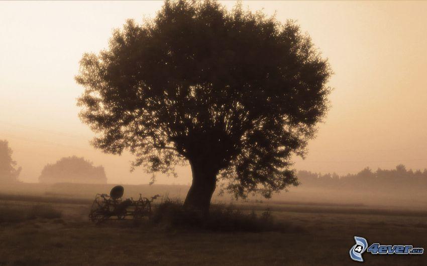 árbol en niebla