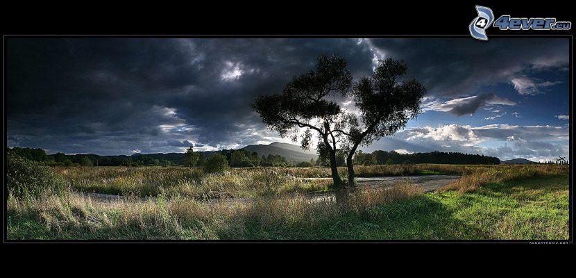 árbol por el camino, hierba, nubes, cielo oscuro
