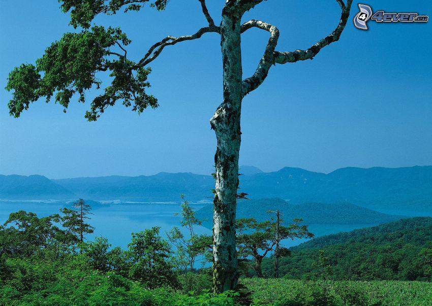 árbol solitario, lago, bosque