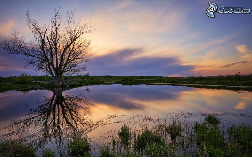 árbol solitario, lago, reflejo