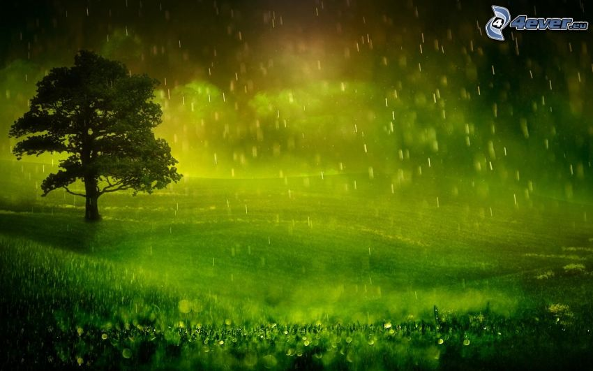 árbol solitario, lluvia, prado