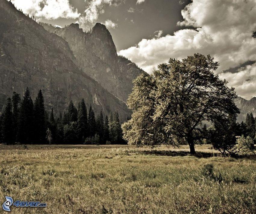 árbol solitario, montañas