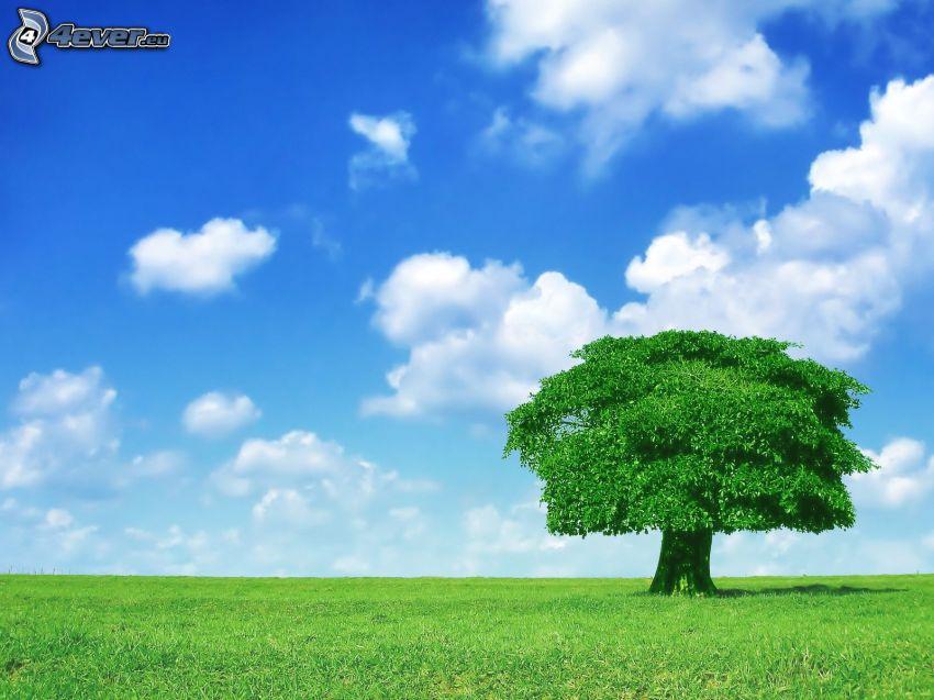 árbol solitario, prado verde, nubes