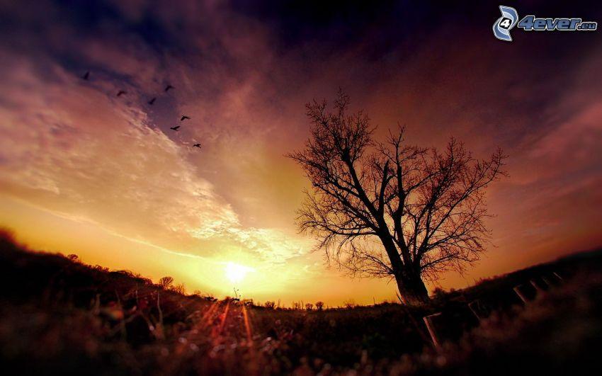 árbol solitario, puesta de sol en la pradera