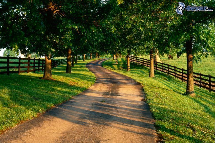 arboleda, camino, líneas de árboles, cerco de madera