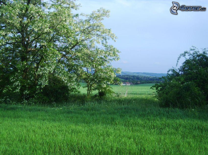 arboleda, paisaje, aldea