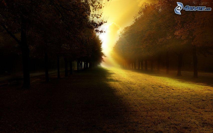 arboleda, puesta del sol