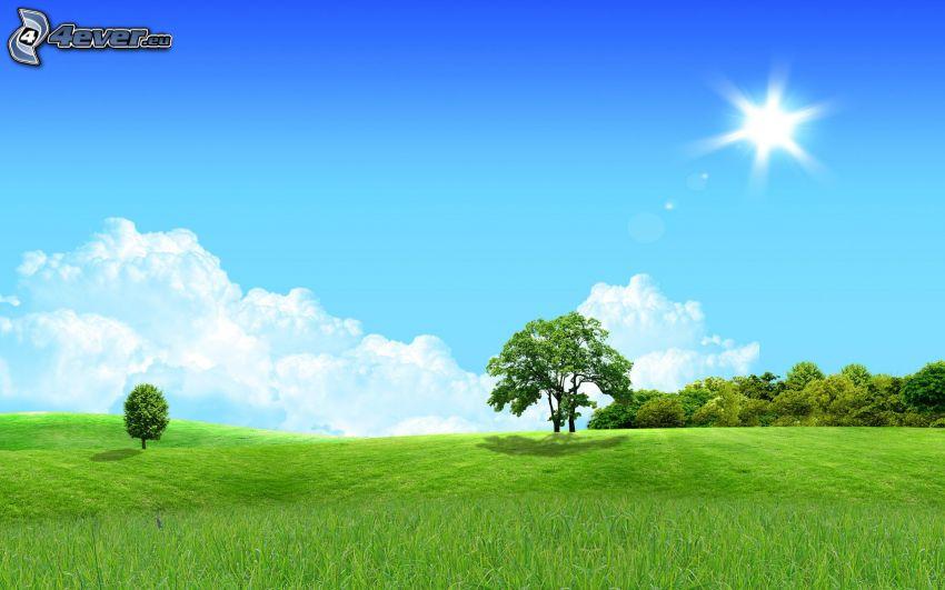 árboles, prado, sol, nubes