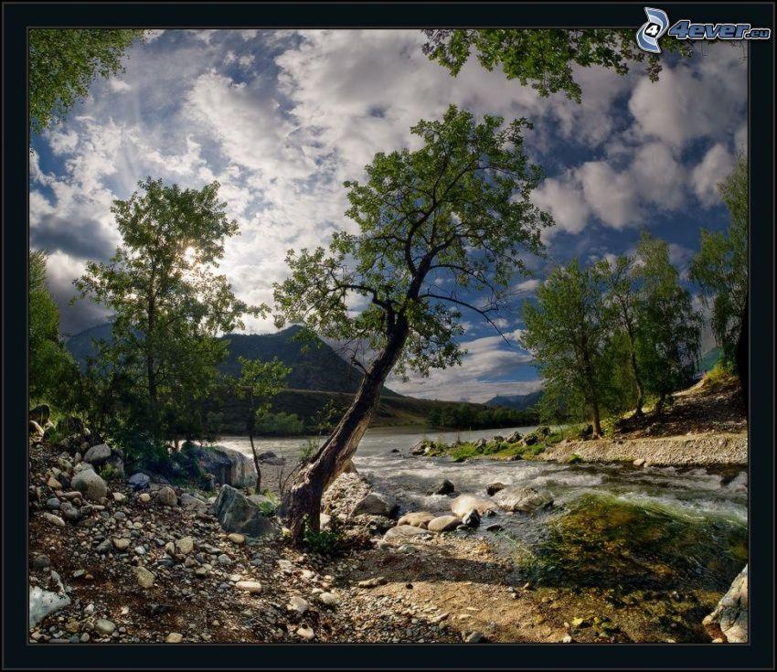 árboles, río, rocas